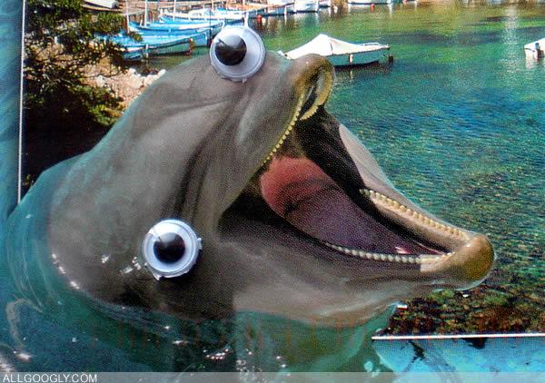 OMFG TRUMP - Whacky Dolphin