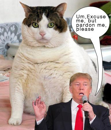 OMFG TRUMP - Fat Cat.jpg