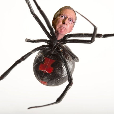OMFG TRUMP-  McConnel Black Widow.jpg