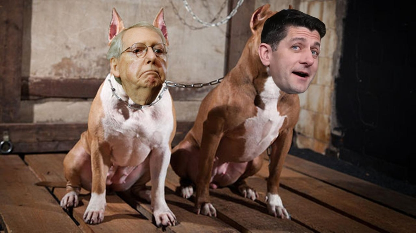 OMFG TRUMP - McConnel Ryan pit bulls.jpg