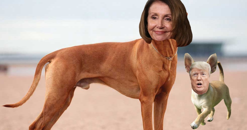 OMFG TRUMP - Pelosi Trump Dogs.jpg