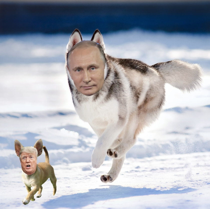 OMFG TRUMP - Putin and Trump dogs.jpg