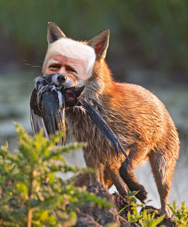 OMFG TRUMP  - As Fox.jpg
